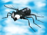 3D Cartoon fly